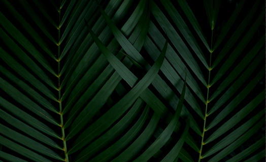 http://pineterraces.co/wp-content/uploads/2020/03/inner_01_02-1.png